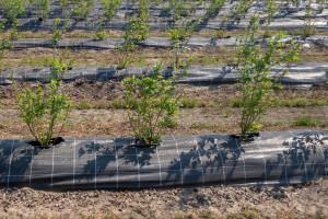 Povišenim gredicama do zdravije biljke i sigurnijeg roda