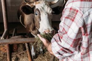 Željko Trifković se vratio iz Australije, prodaje mlijeko, a možda će morati smanjiti proizvodnju