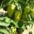 Prihranom osigurajte bujan rast i zelenilo u svom vrtu