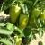 Prihranom osigurajte bujan rast i zelenilo u svom povrtnjaku