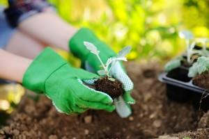 Sedam parova biljaka koje ne bi trebalo da sadite zajedno