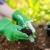 Sedam parova biljaka koje ne bi trebalo saditi zajedno