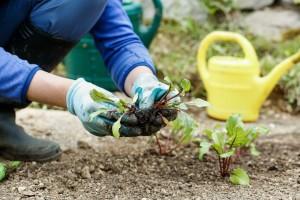 Ekološka gnojiva s najboljim omjerom cijene i kvalitete