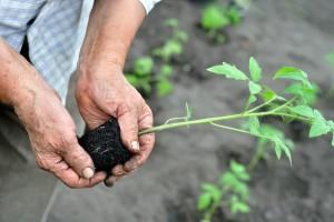 Za kvalitetan razvoj korijena isprobajte najbolje stimulatore i mikorize u gelu na našem tržištu!
