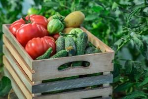 Treba im manje od dva sata da otkriju pesticide u povrću
