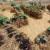 Uzgoj povrća u balama slame - jednostavno i dekorativno