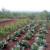 Pravilnim zalijevanjem do većeg i kvalitetnijeg uroda povrća