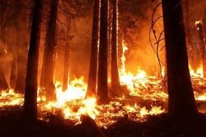 Šume će nam od ove godine štititi videonadzor požara osmišljen u Hrvatskoj!