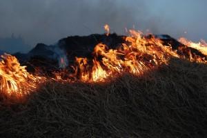 Kazne do 1.500 KM za loženje vatre uz šumu i u šumi