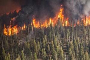U 2019. godini zabeležen 41 požar u državnim šumama Srbije