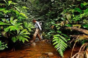 Krije li se iza požara u Amazoniji veliki svjetski biznis s govedinom?