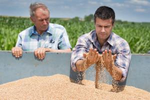 APUS: Pravilnik o otkupu pšenice je dan na uvid samo odabranim kompanijama i poljoprivrednicima