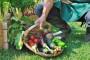 Prehrambena ovisnost RH - Svjetski dan hrane