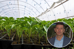 Kvalitetna presadnica - jedan od najbitnijih elemenata u proizvodnji povrća