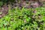 Preslica - idealna za zdravlje ljudi i biljaka