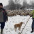 Goran Mačkić: Ovčar s Manjače mjesecima pod vedrim nebom sa 650 ovaca