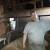 Zoran Karajica: Dnevno isporučujemo 550 litara mlijeka dubičkoj mljekari