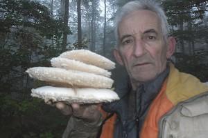 Roman Ostojić: Prijedorski gljivar razlikuje 84 vrste jestivih gljiva