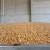 Cena kukuruza dostigla ovosezonski maksimum - 19,5 dinara