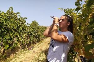 Primjer Marije Josić: Samozaposlila se u laboratoriju za analizu grožđa, mošta i vina