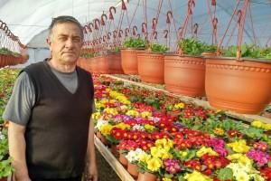 Poklon za osmi mart: Primula - buket u saksiji