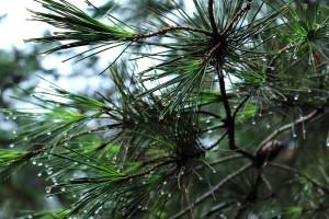 Kišni vikend s olujnim udarima vjetra