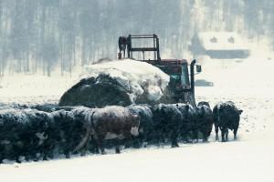 Stiže pogoršanje: Jače sniježne padavine i ove sedmice