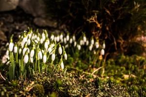 Spremni za proljeće?