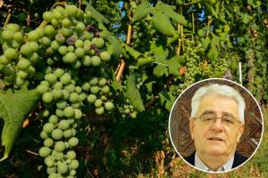 Tko želi vino piti, mora stalno u vinogradu biti