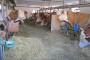 Pad proizvodnje kravljeg mleka u svetu i Srbiji!