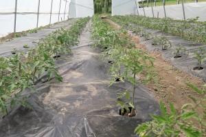 Obezbjeđeni dodatni plastenici za poljoprivrednike, Javni poziv u toku