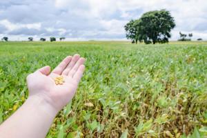 Potpora za proteinske usjeve i proizvodnju proteina visoke kvalitete bez GMO-a?