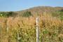 Izumiranje poljoprivrede u Hercegovini
