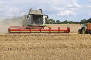 Cena pšenice i dalje raste