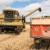Ukrajina ruši rekorde, povećava se i izvoz pšenice iz te zemlje