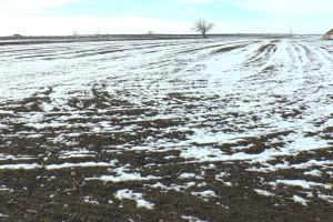 Sneg čuva pšenicu od mraza, a otapanje obezbeđuje vlagu