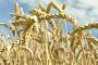 U ponedjeljak kreće isplata za agrarne poticaje