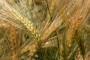 Albanski konzul: Zanima nas uvoz hrane iz Slavonije