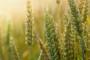 Počelo suđenje za nestalu pšenicu iz slatinskih silosa