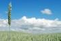 Usvojen prijedlog zakona o poljoprivrednom zemljištu
