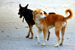 Bihać kreće u borbu s neodgovornim vlasnicima pasa