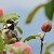 Oterajte bezopasnim metodama ptice iz voćnjaka