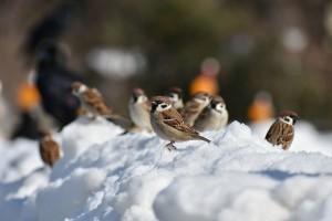 Čeka nas izmjena kiše i snijega i blagi rast temperature