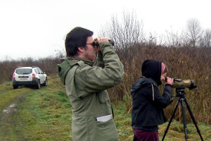 Manje ptica močvarica na Lonjskom polju