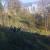 U Užicu će biti posečeno 18 hektara šume, a zasađeno 13.000 stabala
