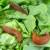 5 načina kako iskoristiti kućanski otpad kao blago za vrt