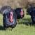 7. Državna izložba izvornih pasmina peradi