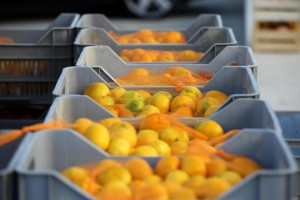 Neizdavanje otkupnog bloka? Proizvođači mandarina zatražili nadzor provedbe ZNTP-a