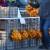 Otkupna cijena mandarina opet drastično pala - uzrok je datum, a ne tržište?