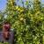 Najvećih 10 proizvođača mandarina u Hrvatskoj
